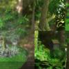 forestScene_compilation